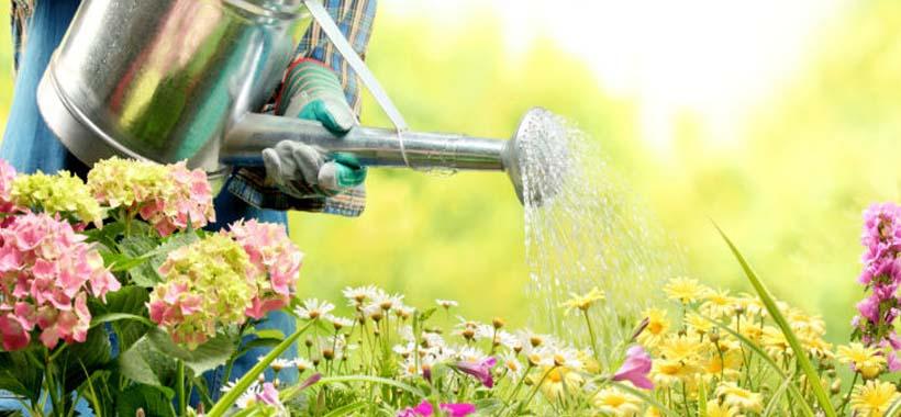 watering can for elderly gardening
