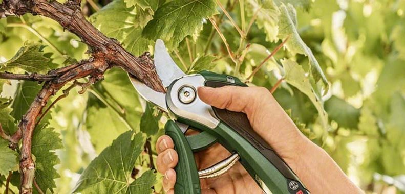 best secateurs for arthritic hands