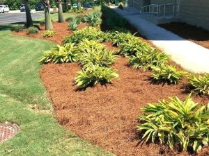 What To Use Instead Of Mulch For Landscaping Yard Work Hq
