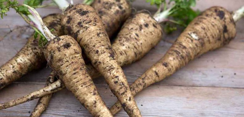 how to store fresh parsnips