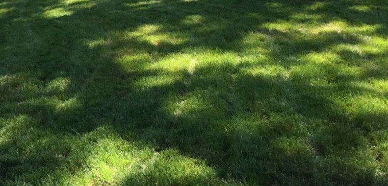 How long does Milogranite take to work on a lawn