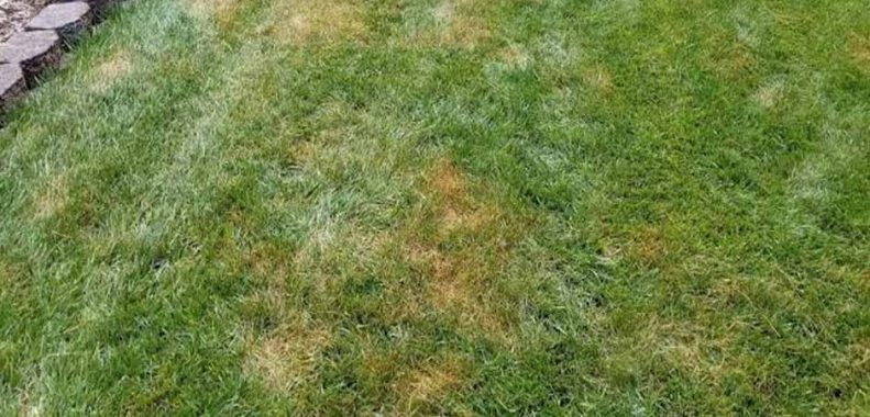 Should you water lawn after applying fungicide