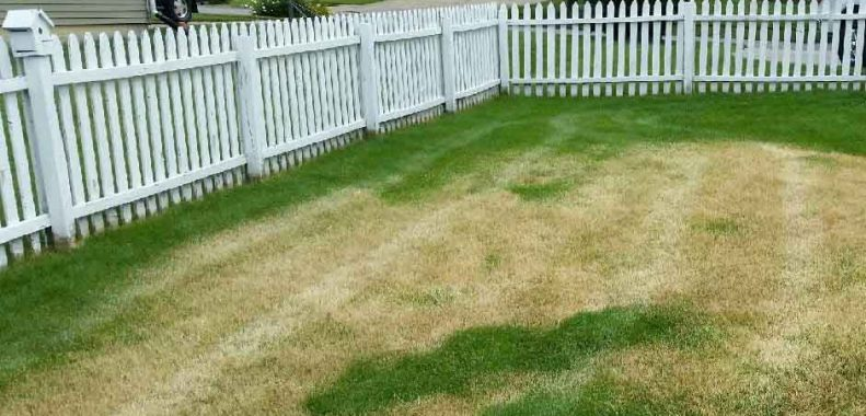 How to fix an over fertilized lawn