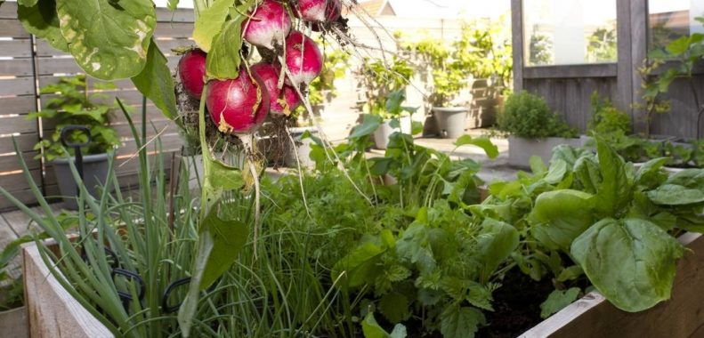 best vegetables to grow on your balcony